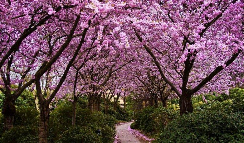 В Одесской области появится цветущая аллея