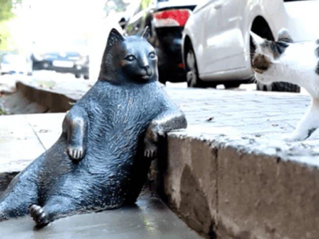 Коты будут главными по туризму