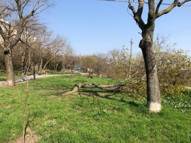 Кто ответит за уничтоженные деревья?