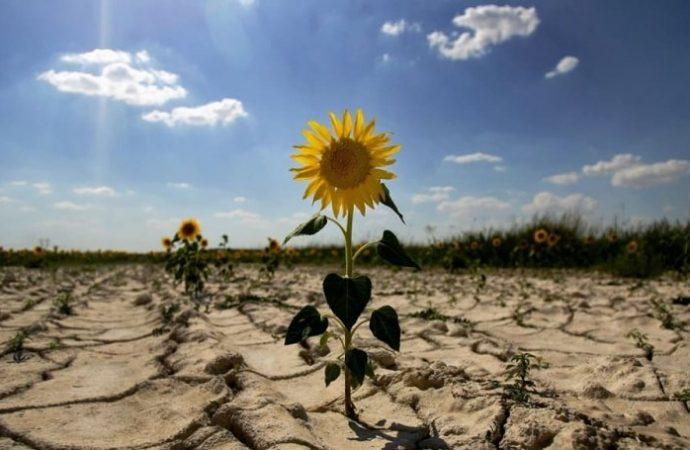 Солнечный удар, или Как меняется климат в Одессе?