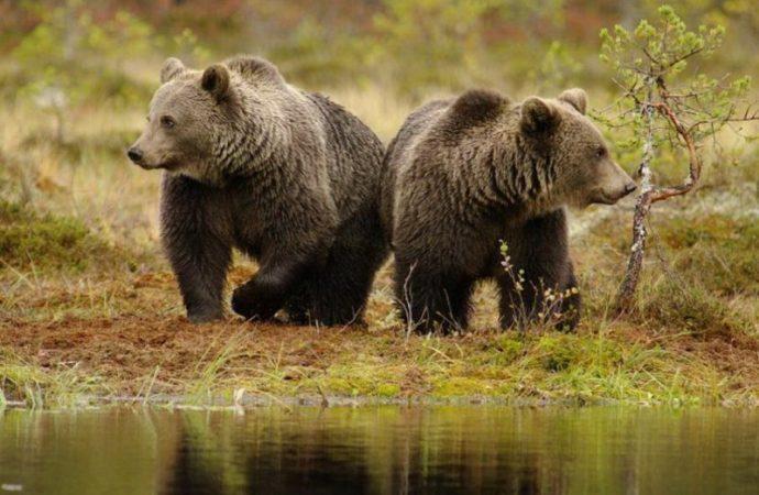 Медвежье новоселье в Одесском зоопарке
