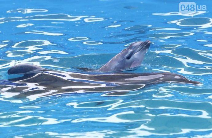 """Рождение дельфиненка: «Все, что его ожидает – хлорируемый бассейн, мороженая рыба и трюки за еду"""""""