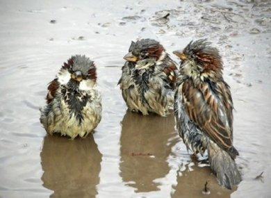 Погода 17 июля. Грозовые дожди могут откорректировать планы