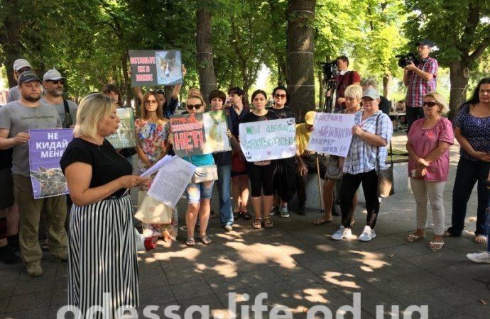 Зоозащитники написали обращение к Президенту Украины и мэру Одессы