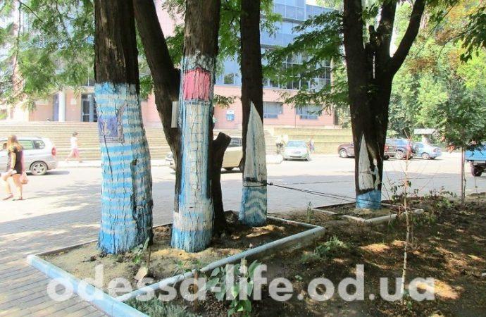 Жители улицы Маршала Говорова придумали тельняшки для деревьев