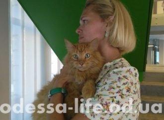 Итоги дня. Задержание подполковника с наркотиками и новая скульптура кота в Одессе