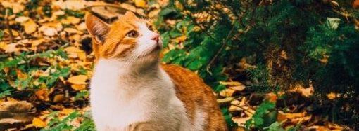 Акция по бесплатной стерилизации уличных котов стартует на этой неделе