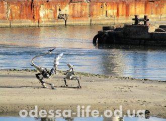 На одесском побережье поселилось необычное семейство (ФОТО)
