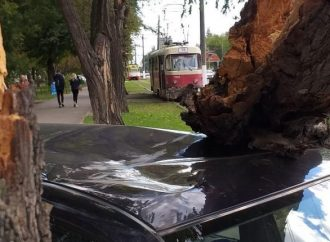 Шквальный ветер в Одессе: падают ветки и стоят трамваи (ФОТО)