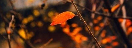 Погода 5 октября. В пятницу в Одессе будет «свежо»