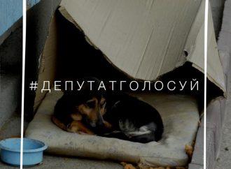 В соцсетях стартовал флешмоб в поддержку законопроекта об усилении защиты животных