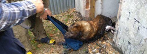 Четырехлапого друга вытащили из глубокой ловушки спасатели в Одесской области