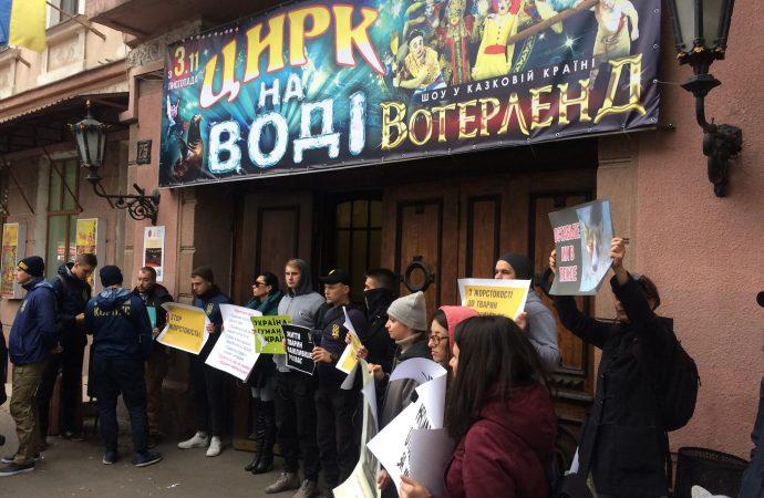 Зоозащитники протестовали против выступления животных в Одесском цирке