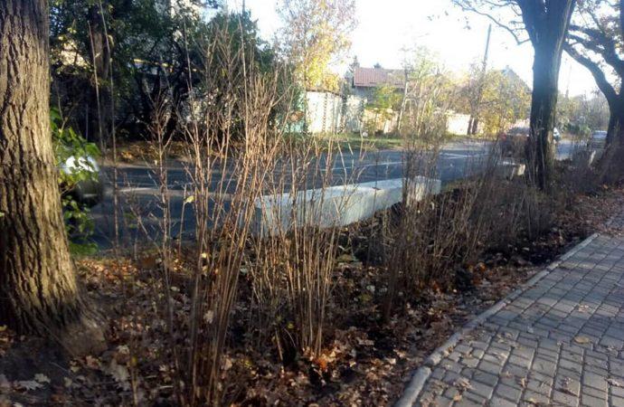 Кусты жасмина теперь будут преграждать автомобилистам путь в зелёную зону Мемориала 411-й батареи