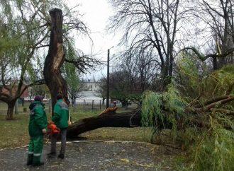Под натиском непогоды в Одессе падают деревья и останавливаются трамваи