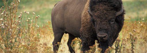 Огромный питомец поселится в Одесском зоопарке