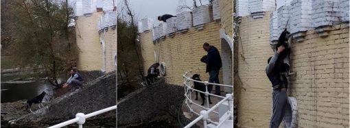 Одесситы спасли хаски, плакавшую посреди пруда в Дюковском парке
