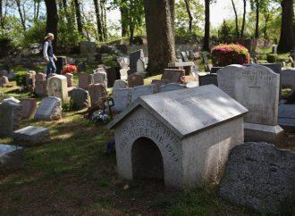 Продолжение истории с доберманом: мэр заинтересовался, где в Одессе хоронят умерших питомцев