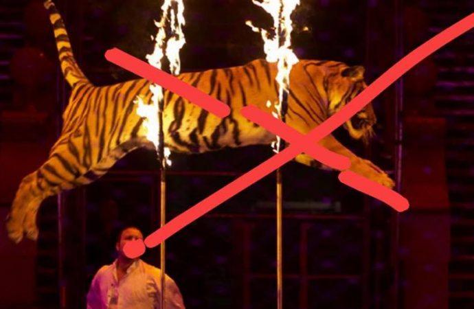 Дрессированные хищники могут исчезнуть с арены Одесского цирка