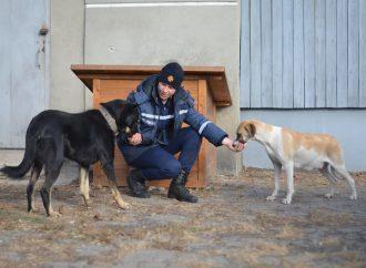 Лучшее спасение: одесские спасатели приютили пару бездомных собак и ждут пополнение