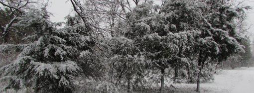 Погода 18 декабря. День будет морозным и облачным