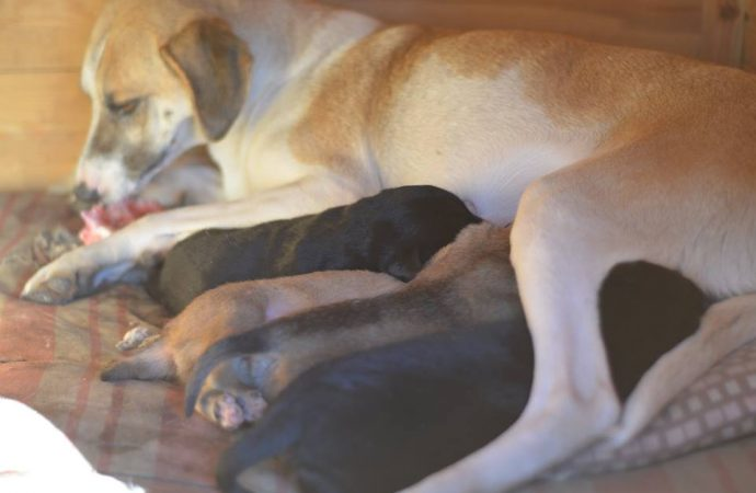 Одесские спасатели ищут семью для новорожденных щенков