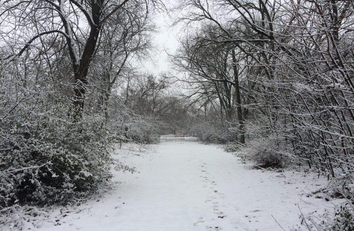 Погода 14 января. Снова ожидается мокрый снег