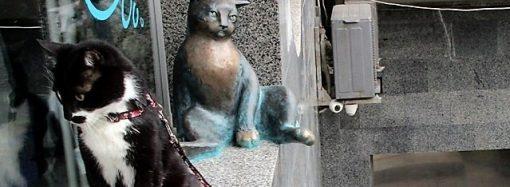 «Кошачья тропа» в Одессе продлевается: в полиэфире «увековечен» кот Чилик-Челентано