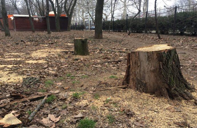 Спил деревьев в парке Горького: заготовка дров или санитарная очистка?