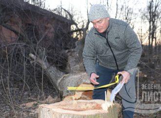 В Одессе снова вырубили деревья