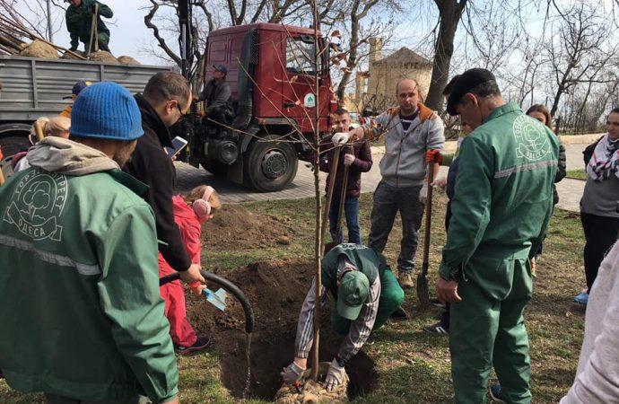 Рябиновая рощица появилась в парке Шевченко
