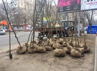 Одесситов призывают озеленять город: саженцы обещают выдавать бесплатно