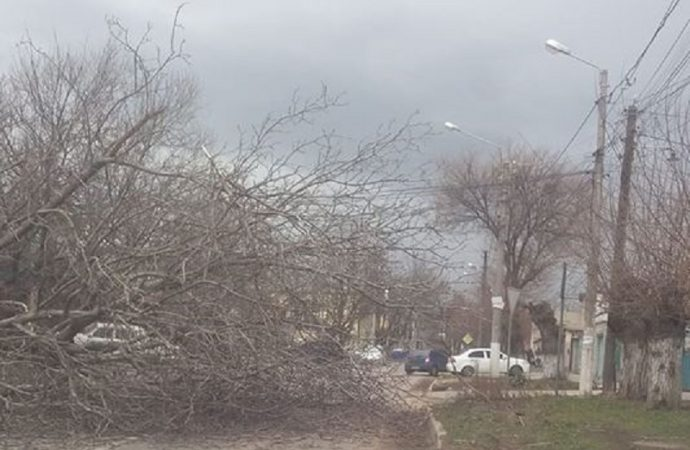 Шквалы в Одессе: уже упало несколько деревьев