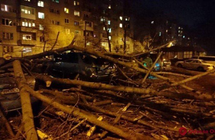 Разбиты пять автомобилей: в Одессе во дворе жилого дома рухнуло большое дерево