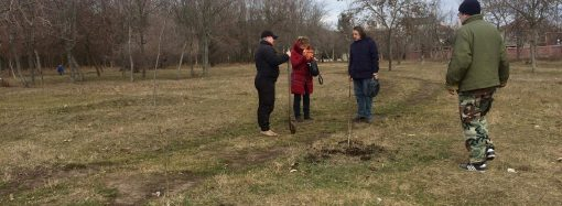 В парке Мемориала 411-й батареи высадили саженцы орехов