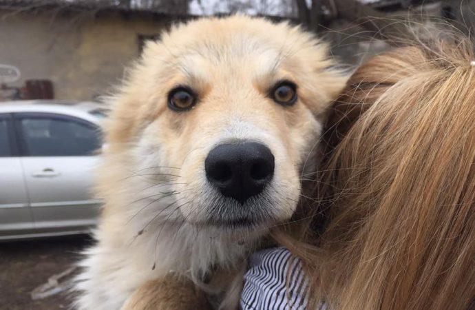 Одесский проект помог найти дом и хозяев для 1500 бездомных животных