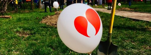 Одесситы высадили деревья жизни, чтобы поблагодарить доноров всего мира