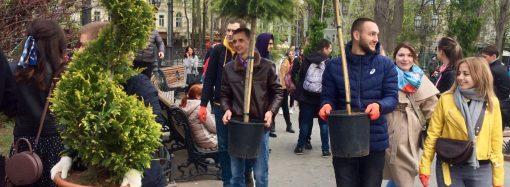В Горсаду высадили декоративные деревья