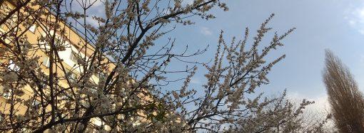 Погода 3 апреля. Ночью ожидаются заморозки