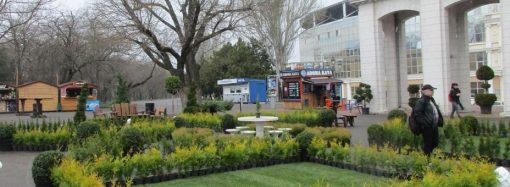 Большой фестиваль садово-парковой культуры в парке Шевченко: коррективы внесла погода