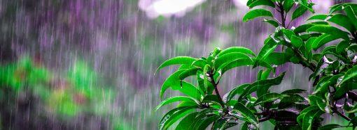 Погода 13 апреля. Одессе снова обещают туман и дождь
