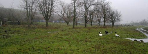 В Одесской области нашли тело новорожденного