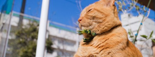 Погода 4 апреля. В Одессе будет тепло и малооблачно