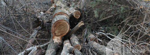 Полиция установила, кто вырубил деревья на Даче Ковалевского в Одессе