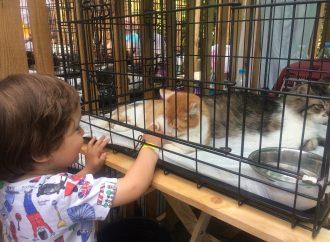 «Home me fest»: более полусотни животных из одесских приютов обрели свой новый дом
