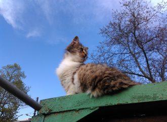 Три одесских ветклиники с 16 мая будут снова бесплатно стерилизовать уличных кошек