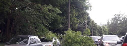 В Одессе рухнуло дерево: поврежден автомобиль, порваны провода