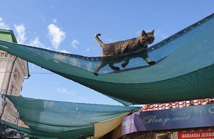 Конкурент Одесского цирка: кот-канатоходец «показывает класс» над головами посетителей мясного корпуса