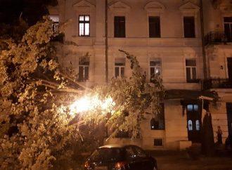 Сильный ветер повалил большое дерево на Дерибасовской