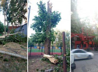 Из-за ветра в городе продолжают падать деревья: за сутки насчитали уже 23